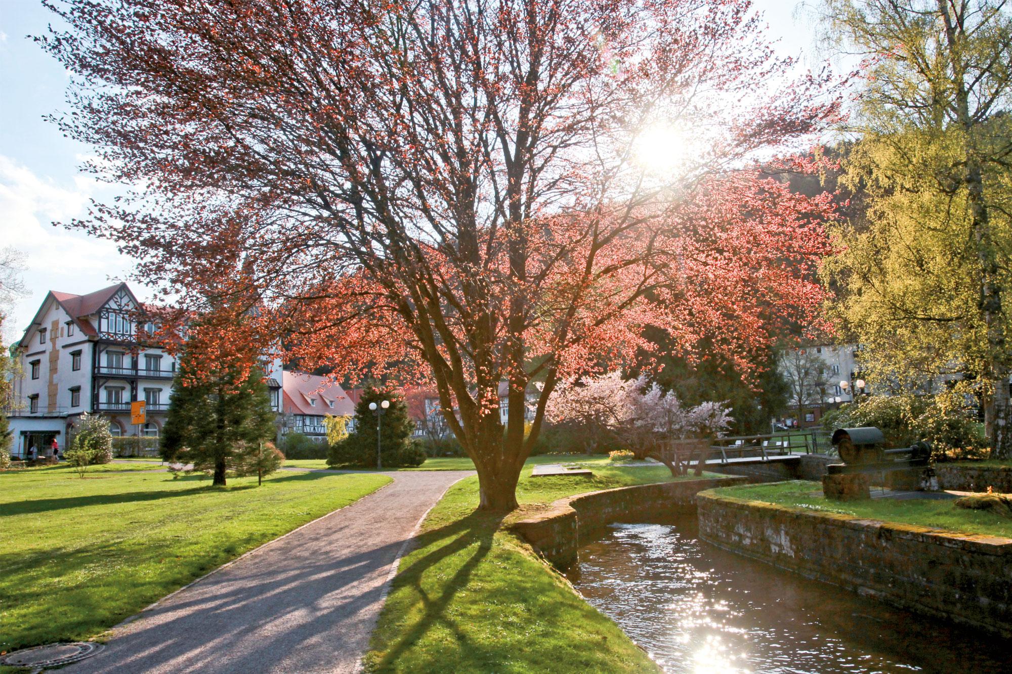 Kurpark in Bad Herrenalb im Frühling