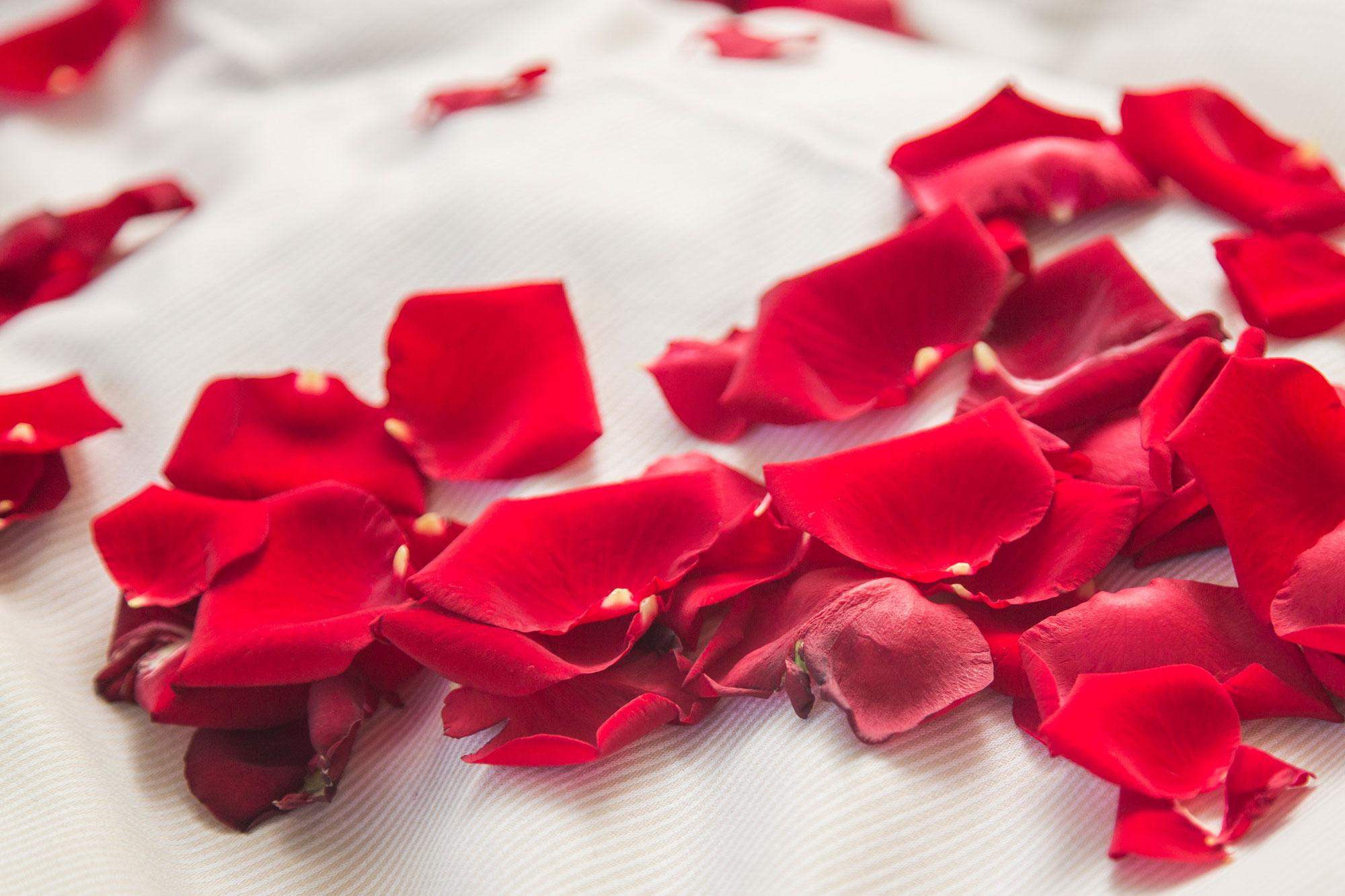 Rosenblätter auf weißem Bettlaken