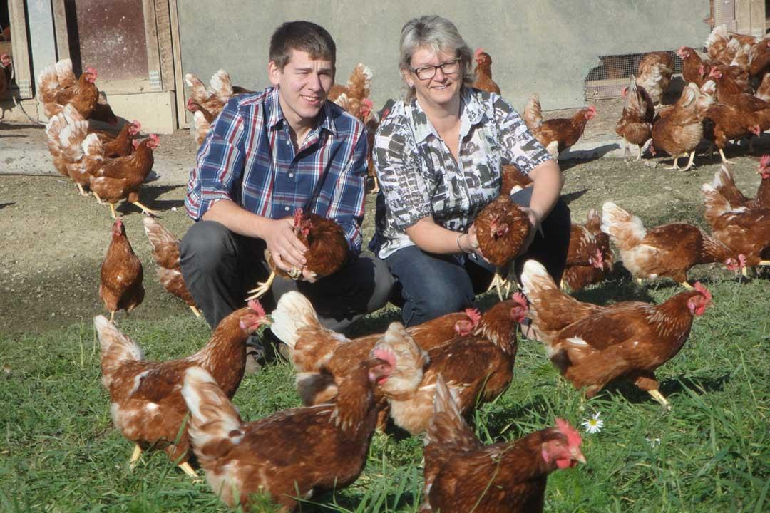 Hühner auf dem Biolandhof Reiser, deren Eier im Rahmen des Bioland Zertifikat in der Küche des Hotel SCHWARZWALD PANORAMA verwendet werden